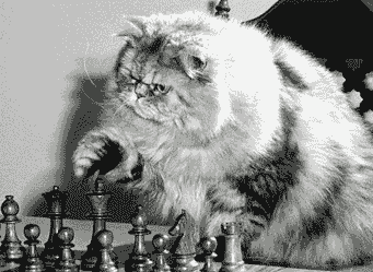 Chat joueur d'échecs